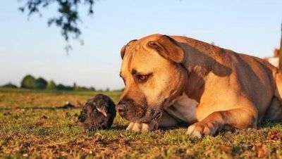 Грибок на коже у собаки как лечить
