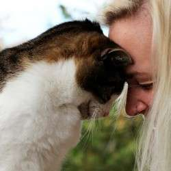 Как кошки выбирают себе хозяина