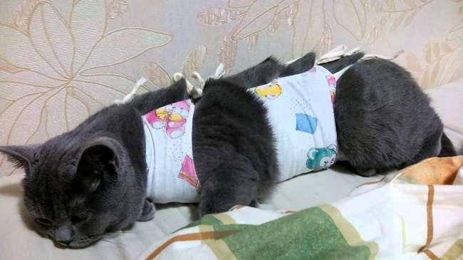 Как правильно одеть попону на кошку?