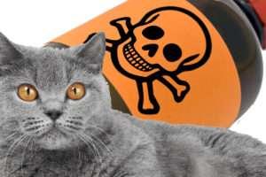 Чем отравить кошку без последствия в домашних условиях