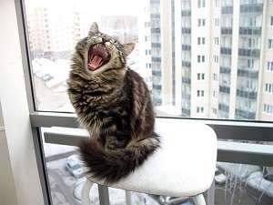 Почему орет кошка по ночам и днем. Кот орет по ночам что делать