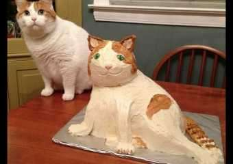 Кошки похожие на леопарда порода