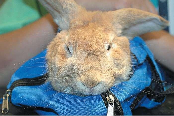 Кролик лежит на спине