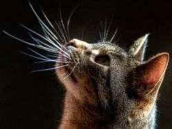 Что будет если у кота выпал ус