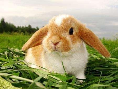 Зерновое меню кроликов: изучаем все аспекты кормления 62