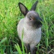 Зерновое меню кроликов: изучаем все аспекты кормления 19