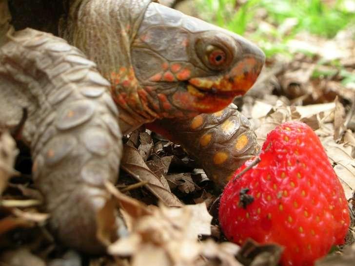 Почему сухопутная черепаха вялая и не ест