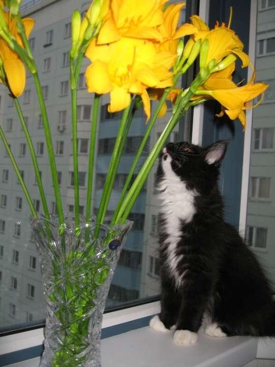 ядовитые растения для кошек с фото считаю имя виктория