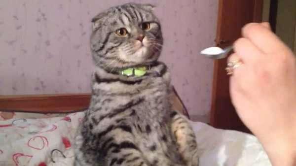 Как накормить кошку если она ничего не ест