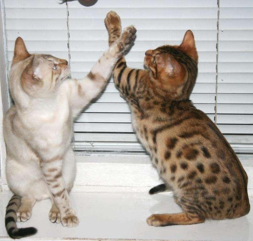 У кошки моча пахнет аммиаком