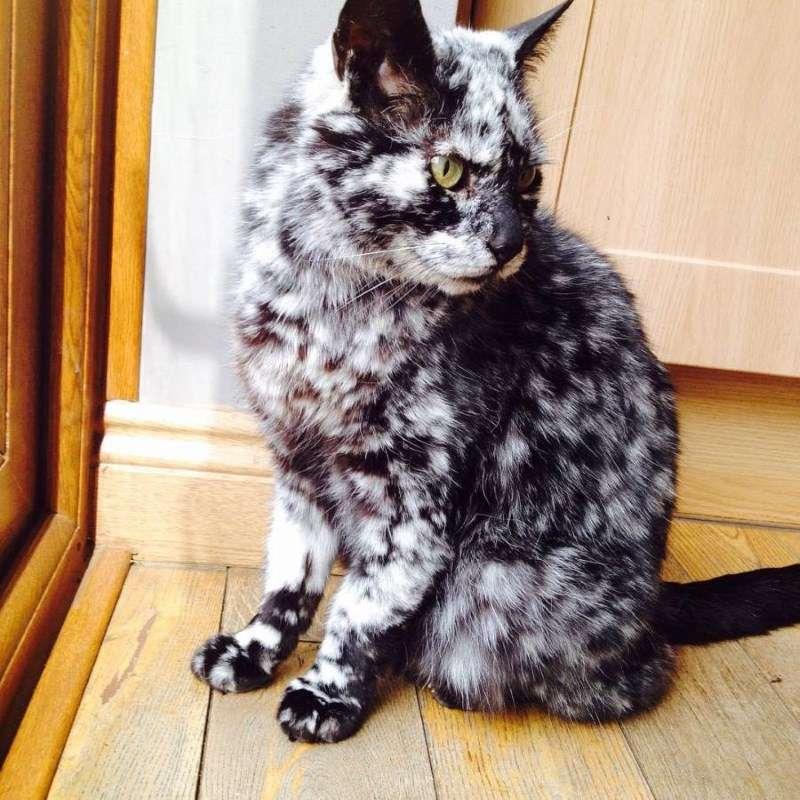 Папиллома у кота как лечить — У истоков здоровья