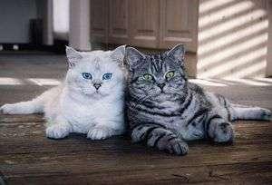 Средство от кошек чтоб не гадили, как прогнать кошку из подъезда?