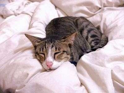 Ангина у кошек признаки и лечение заболевания