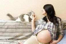 Почему нельзя беременным бить животных. Почему беременным нельзя гладить кошек: «бабушкины» приметы и реальные угрозы