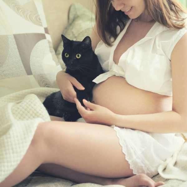 Почему беременным нельзя общаться с кошками