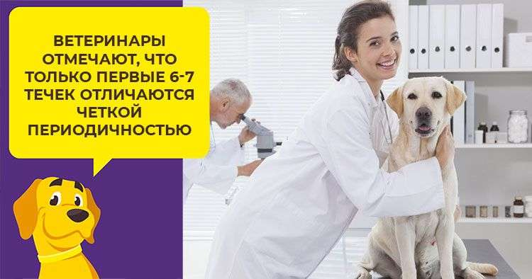 skolko-dlitsja-techka-u-sobak_1_1.jpg