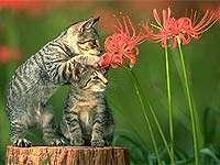 Холангит  воспаление желчных протоков у кошек