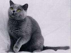 Стерилизация кошек лапароскопическим методом сухаревская. Лапароскопическая стерилизация кошек: плюсы и минусы
