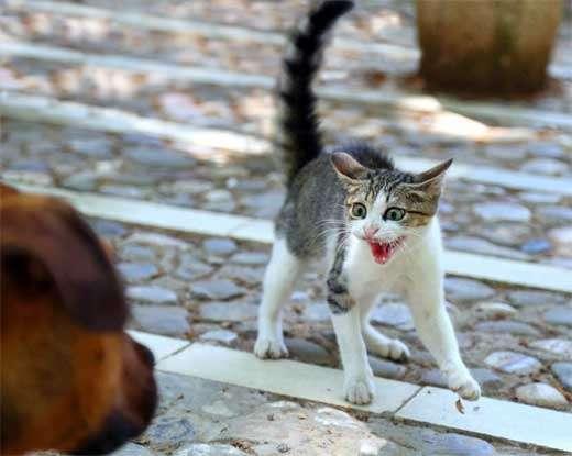 Варианты почему кошка может шипеть: на кота, своего хозяина и другие примеры