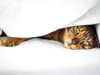 Нос у кошки не дышит