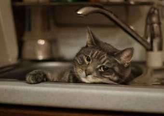 Как найти кошку, если она убежала?